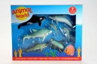 Oceán- zvířecí svět
