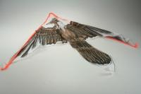Drak létací Orel hnědý nylon