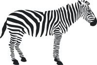 Samolepící dekorace Zebra