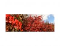 Obraz FENG-SHUI oheň-Červené lístečky